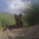 Lekker zonnen in de duinen